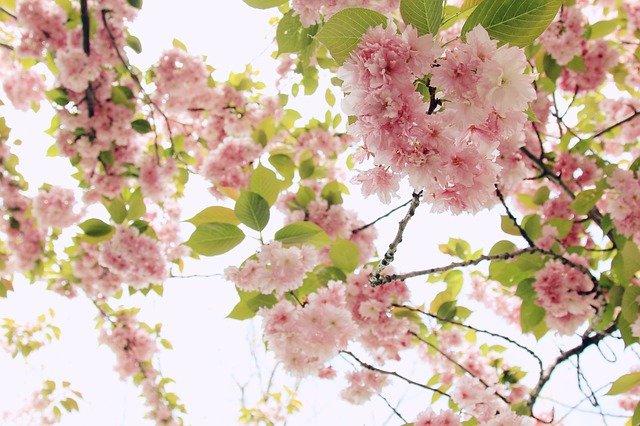 blooming-1839143_640.jpg